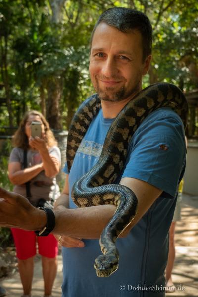Schlangenbegegnung