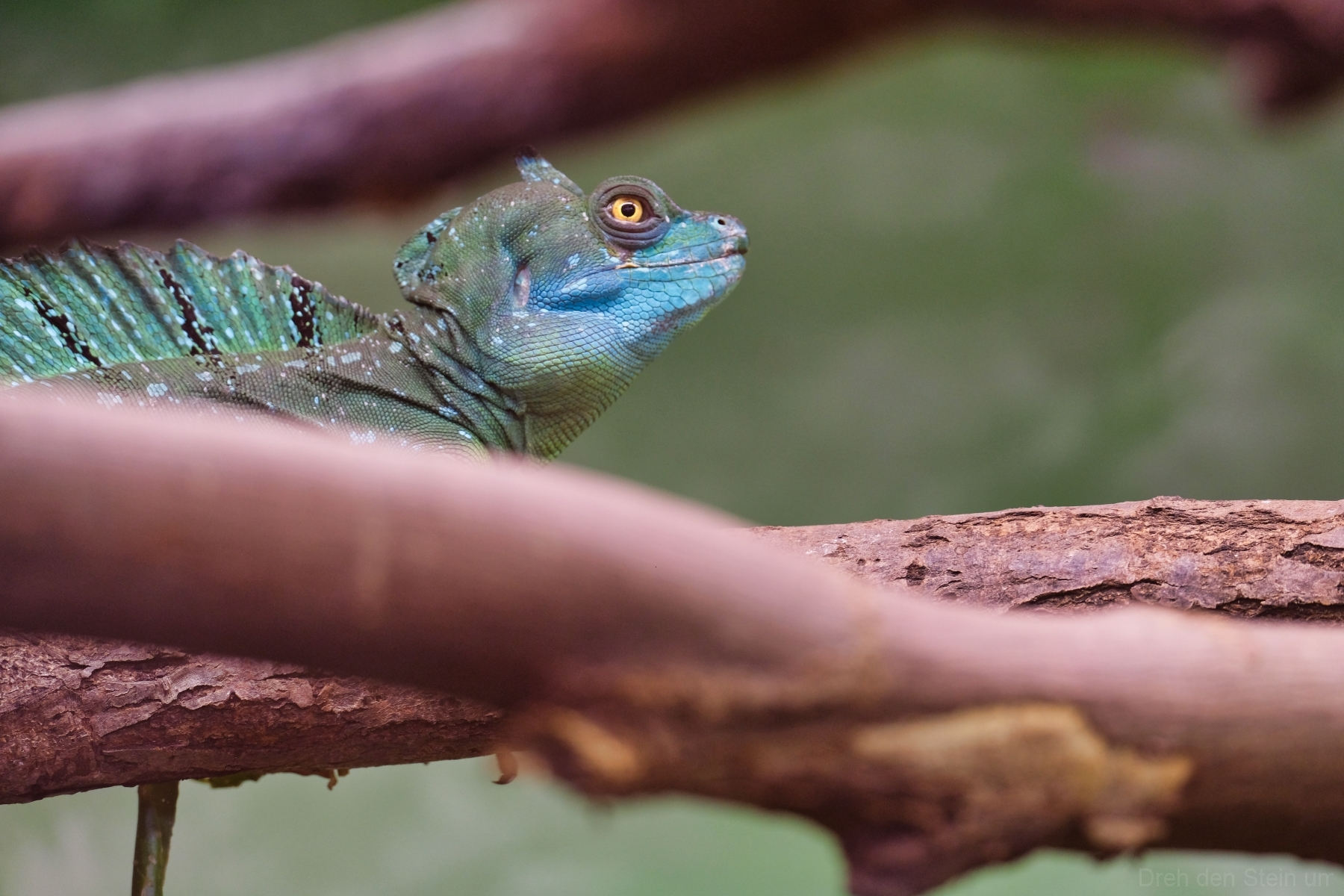 Reptiliengehege