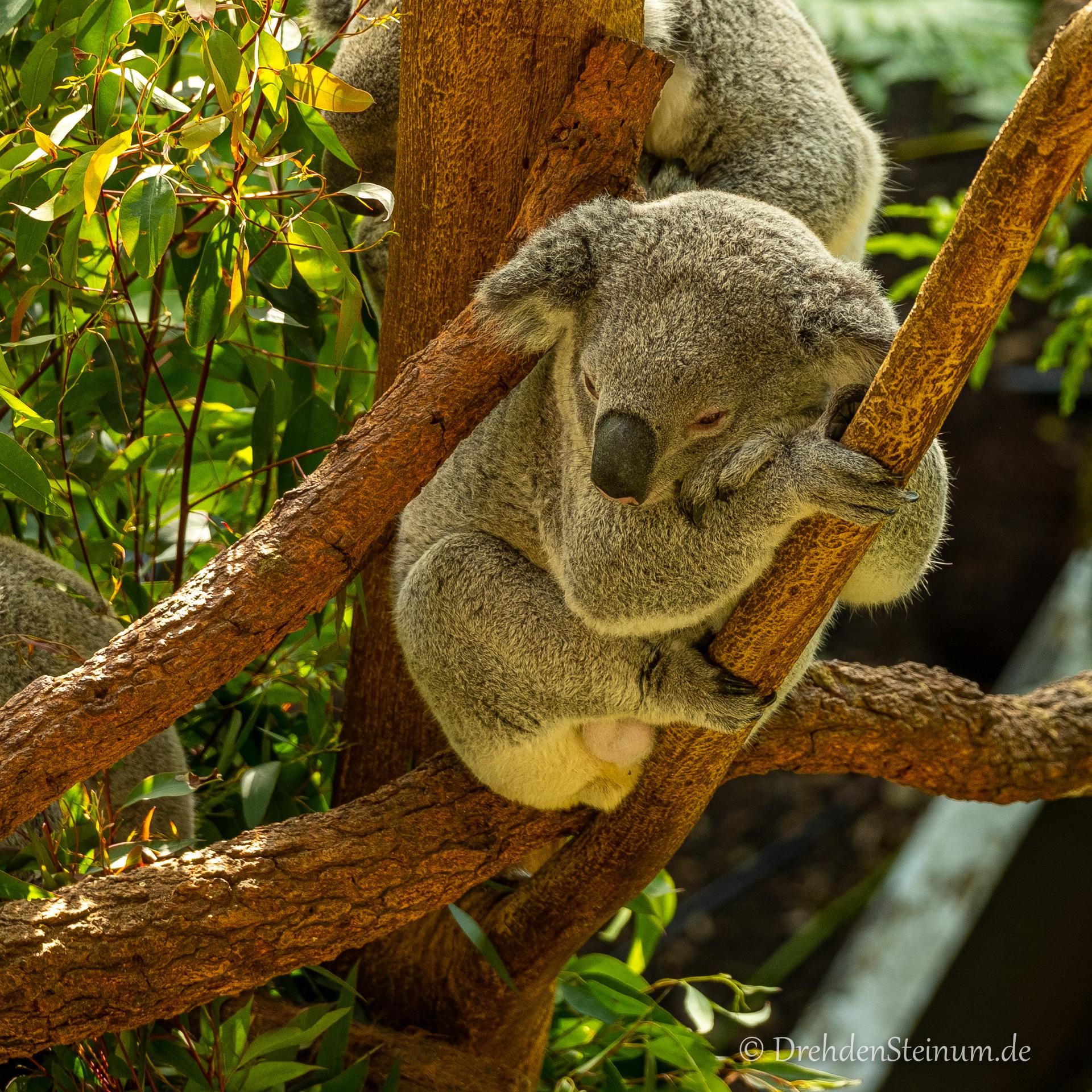 Taronga Zoo – Tag 3 in Sydney